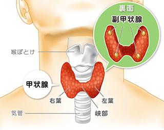 血液 検査 ホルモン 甲状腺